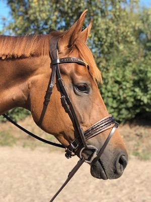 Tokyo Snaffle bridle, chocolate with flower print and fineline crystal piping