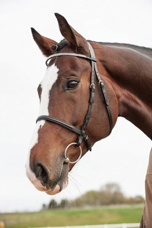 Leather show bridle for your mare