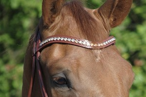 XL crystal browband with Golden Shadow from Otto Schumacher